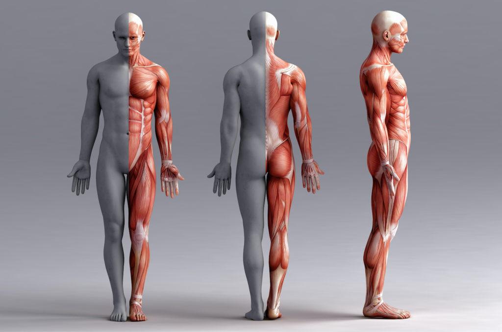 痛みの原因を明らかにし、根本から状態をみるから